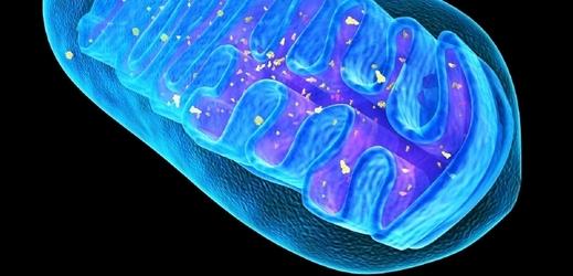 Stárnutí a degenerace buněk